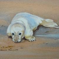 Seal -Pup
