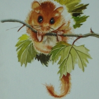 The-Dormouse