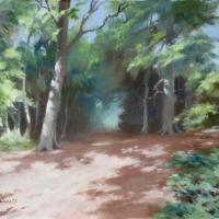 sunlight-in-hogback-wood